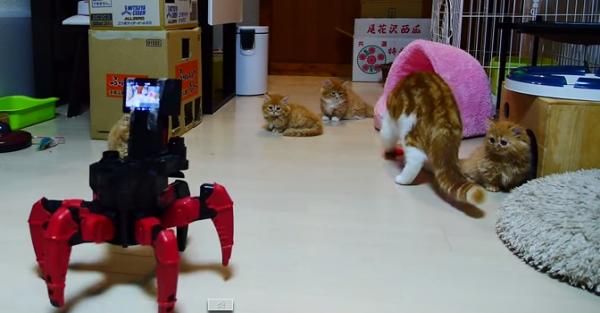 Kitten-VS-Roboter